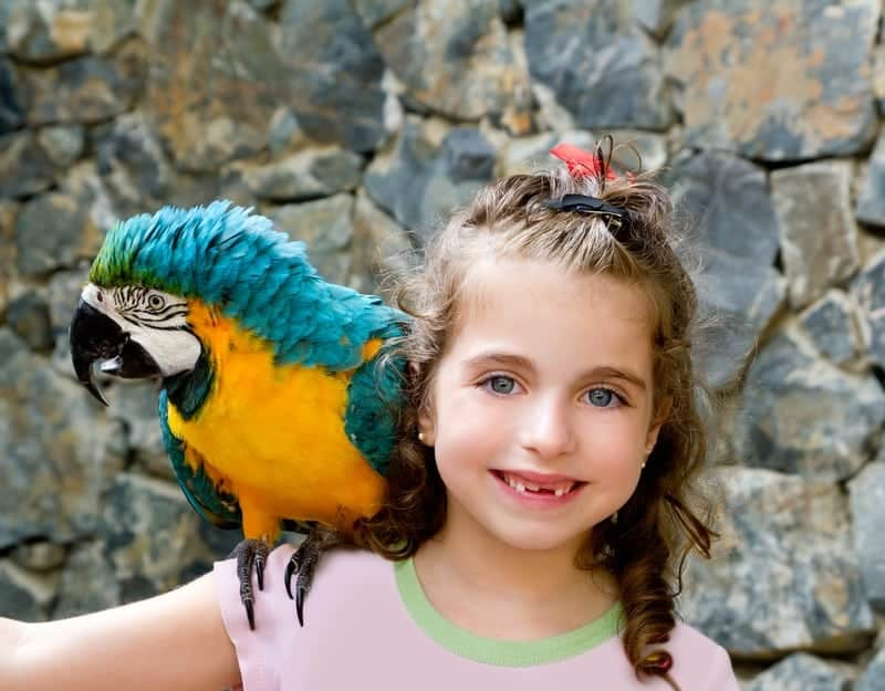 3 Reasons to Visit Parrot Mountain in Pigeon Forge This Summer