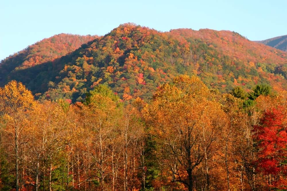 Photo of the gorgeous fall colors in Cades Cove.