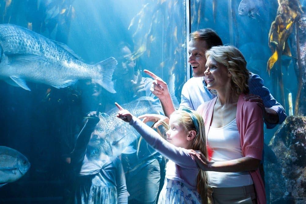 Family looking at fish close to our cabins near Ripley's Aquarium Gatlinburg.