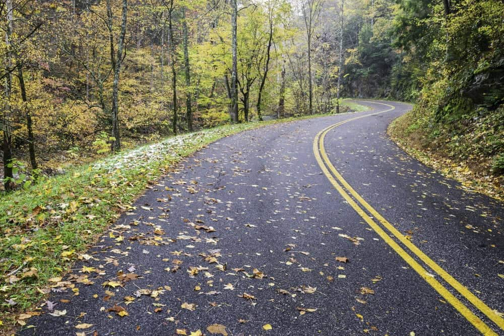 road in the smoky mountains with leaves on it