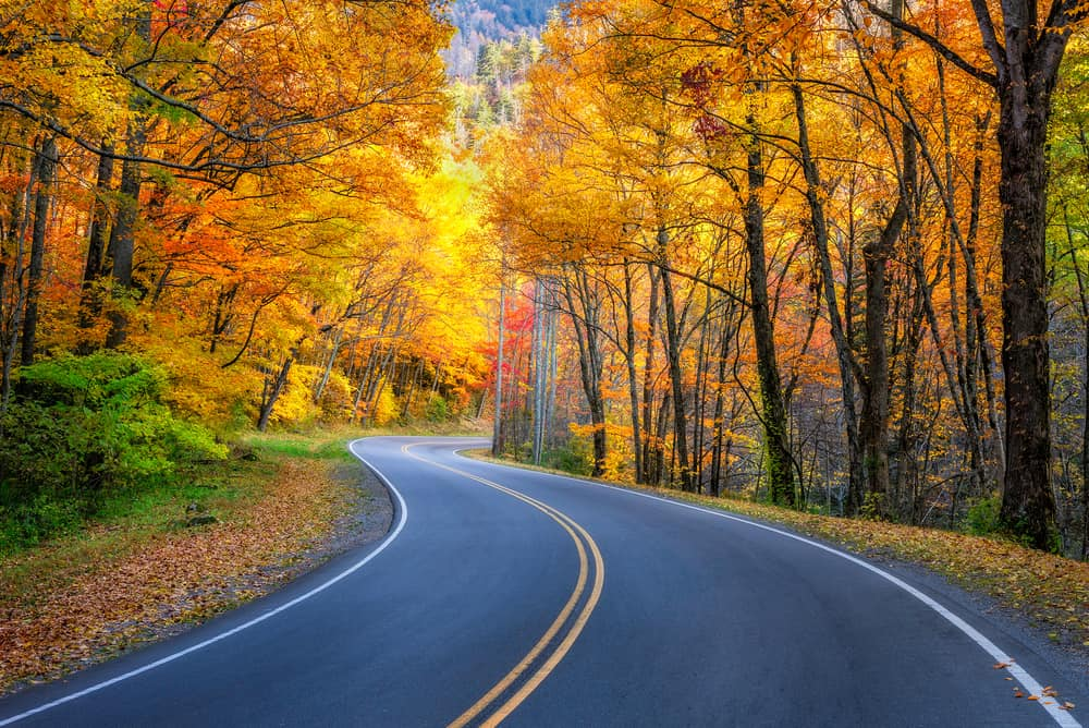 Top 4 Scenic Drives in the Smoky Mountains You'll Want to Explore